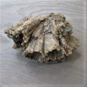 Aragoniet Cluster Bruin