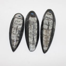 Zwarte Orthoseras