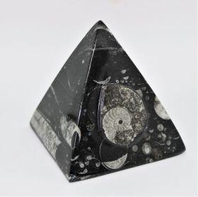 Goniatiet Fossiel Piraminde