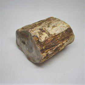 Versteend houten pillaar