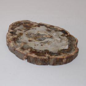 Schijf van Versteend Hout 315 gram