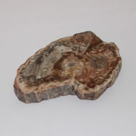 Schijf van Versteend Hout 165 gram