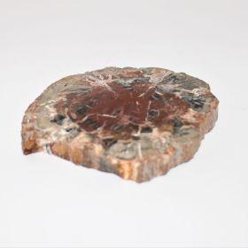 Schijf van Versteend Hout 170 gram
