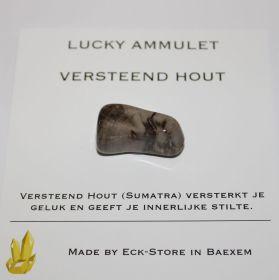 Versteend Hout trommelsteen